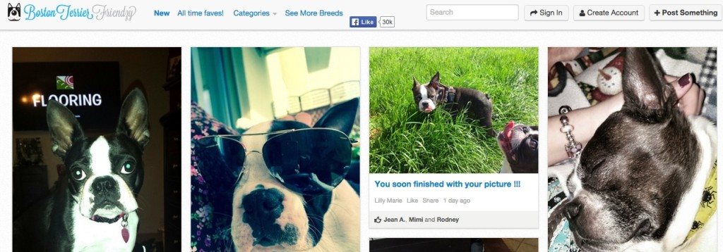Boston Terrier Dog Friendzy Page