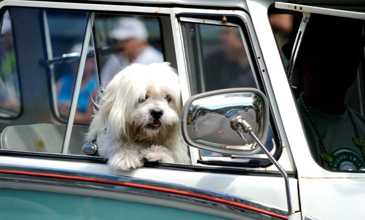 Dog in a car by Daniel Ramirez
